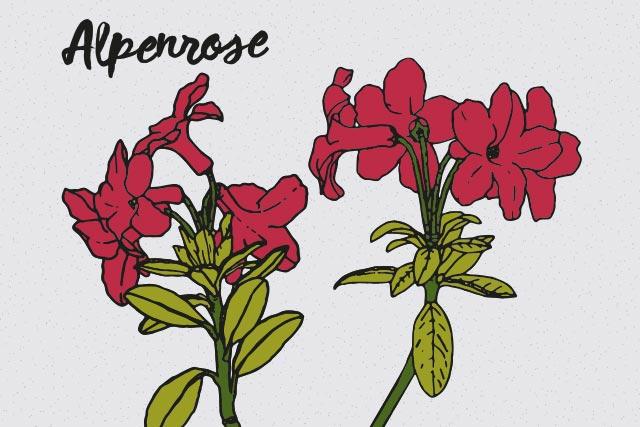 alpenrose-1